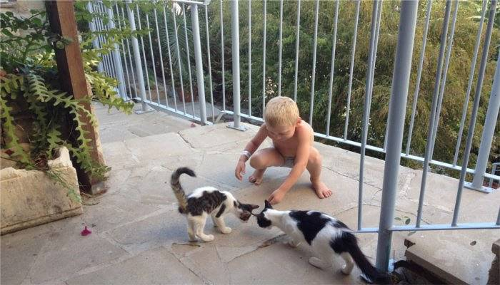 Smally boy plays with cats in Cyprus