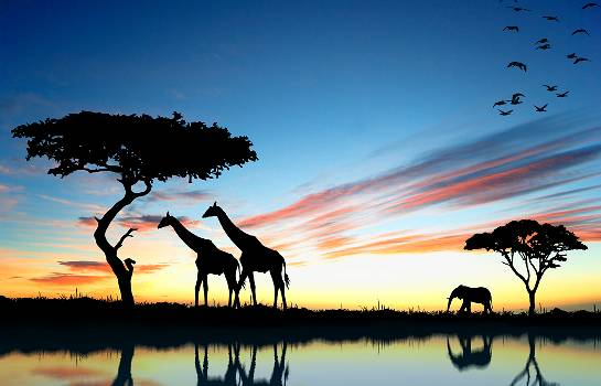African Safaris: A Guide