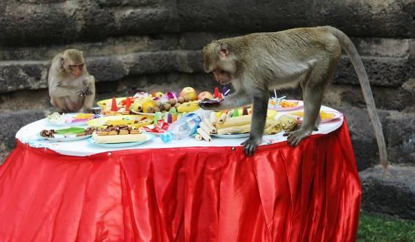 Monkey festival Thailand