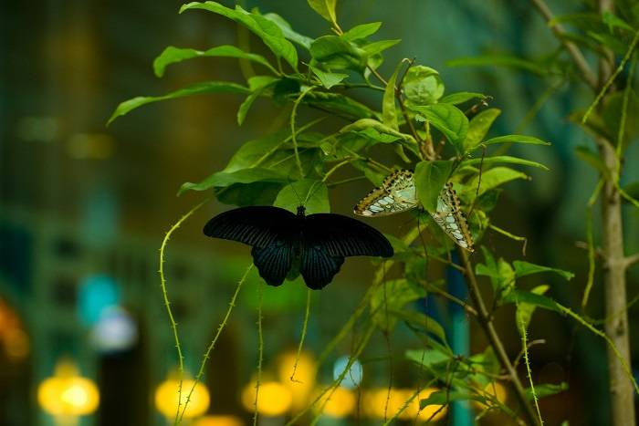 Butterflies in Singapore Airport