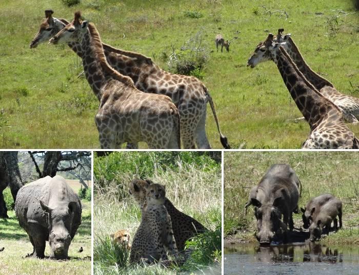 Wildlife from Kragga Kamma