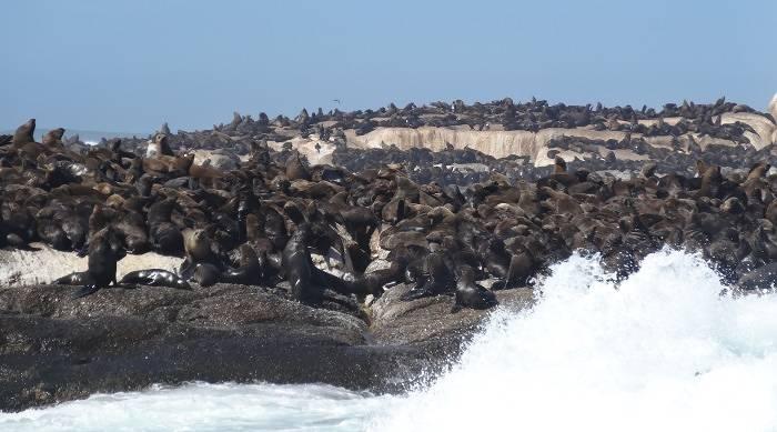 Waves crashing on Seal Island