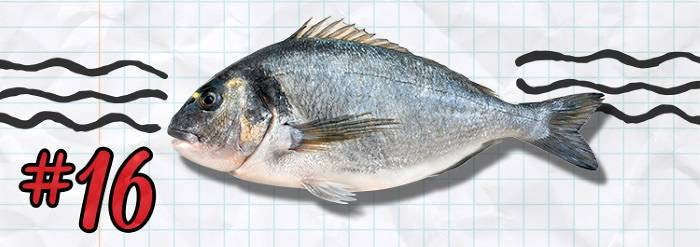 #16 Sydney Fish Market