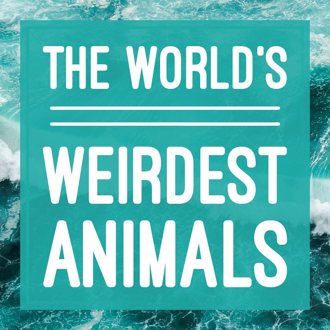 Title image - The world's weirdest animals