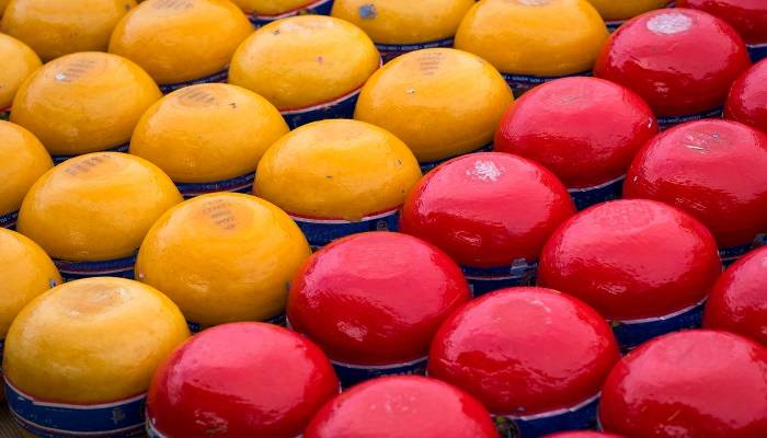 colourful edam cheese in netherlands
