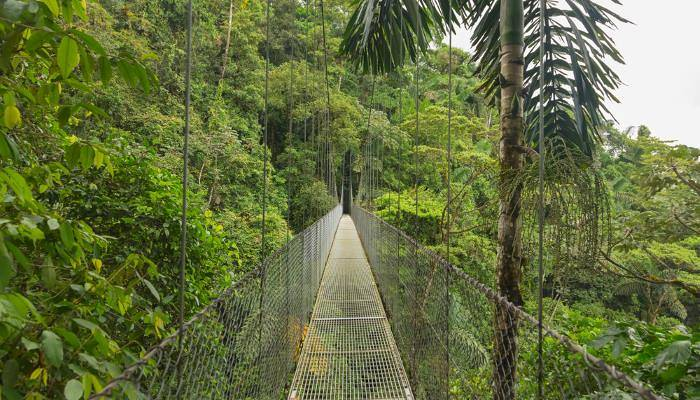 picture of rainforest