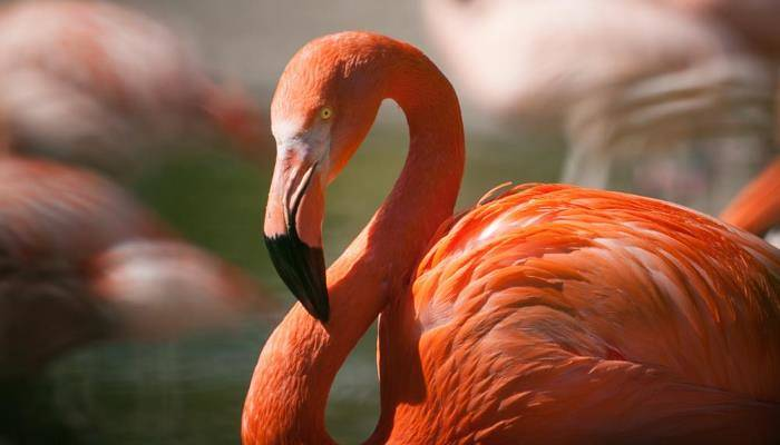 picture of a flamingo