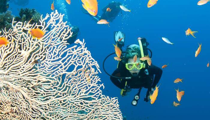 picture of the Great Barrier Reef