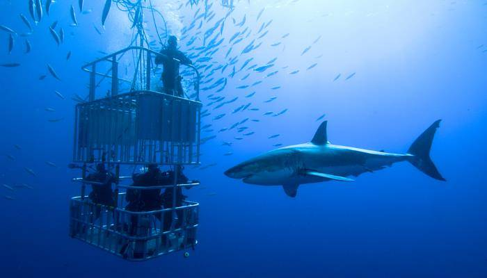 a picture of a person shark diving in a cage