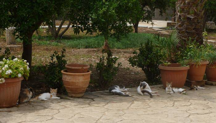 a picture of cats outside a monastery
