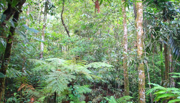 picture of virgin rainforest