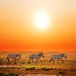 5 Tips for a Budget Safari…